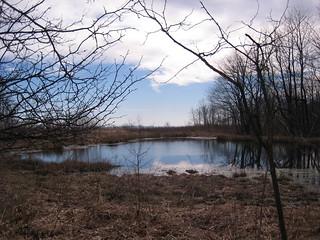 Pond on Chestnut Ridge