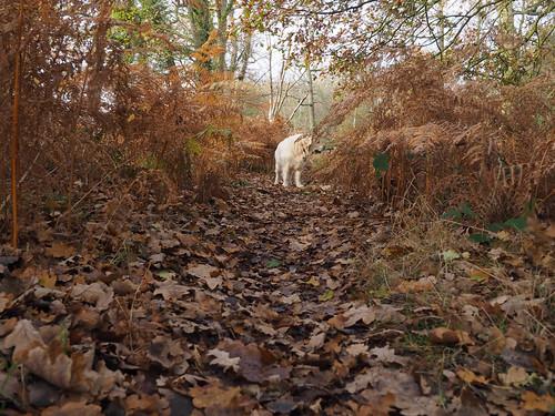 Dog Saturday.Buster.Explored