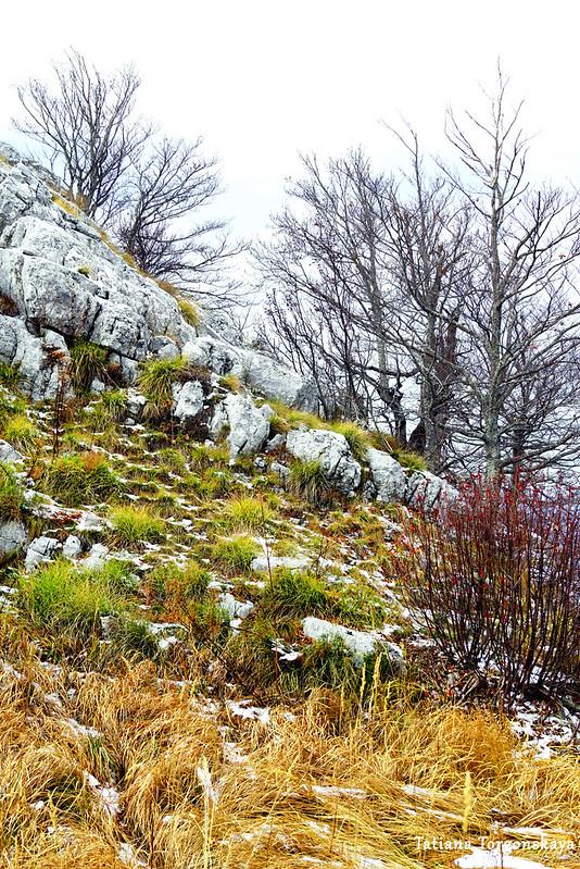 Растения на горном хребте в ноябре