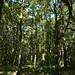 Notton Wood Nature Reserve (103)