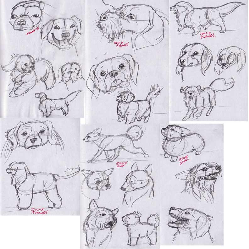 11.23.18 - National Dog Show Studies