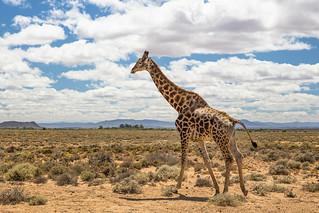 In the Little Karoo