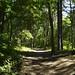 Notton Wood Nature Reserve (95)