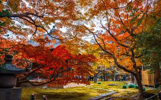 Brocade autumn in Kamakura
