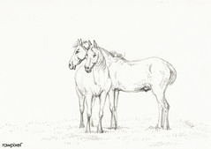 Two horses standing together (1816) by Jean Bernard (1775-1883). Original from the Rijks Museum. Digitally enhanced by rawpixel.
