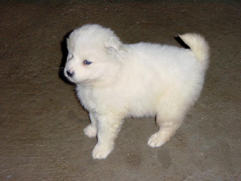 Fotos de animales de todo tipo incluyendo mascotas que más te gustan - Página 14 46314846251_ac0c7f8de7_c