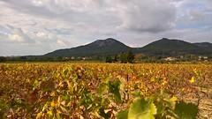 Vignes de Provence #HDR