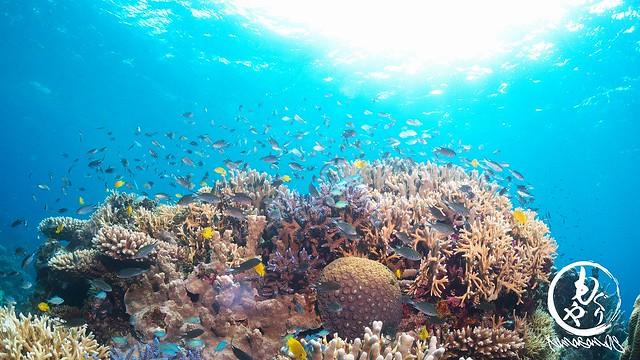 サンゴに熱帯魚たち♪
