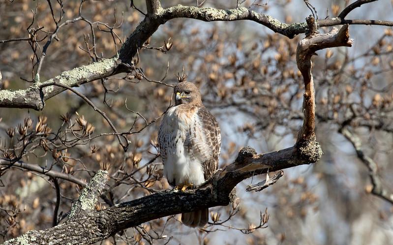 Birds at Maymont