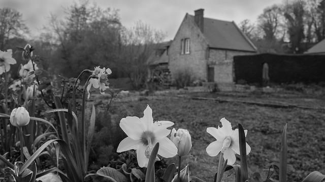 Veules les roses, Nikon D3100, AF-S DX Zoom-Nikkor 18-55mm f/3.5-5.6G ED II