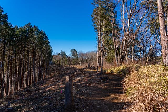 堂所山を巻き伐採帯へ