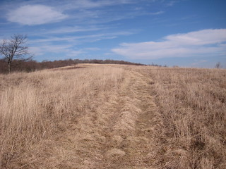 Chestnut Ridge in March