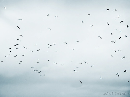Birds on Blue | Anita