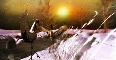 winter cranes