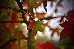 Automne… - Photo of Magny-le-Freule