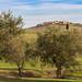 Ulivi e Mucigliani - Leonina - Asciano by mire_52