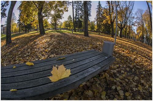 fall autumn sügis park pärnu vallikäär
