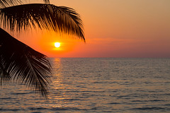 Ko Kut (Koh Kood) island - coconut palm leaves bending over the setting sun and horizon at sunset.