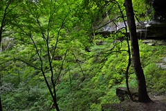 Limestone Cliffs and Forest Along the Cedar Sink Trail (Mammoth Cave National Park)