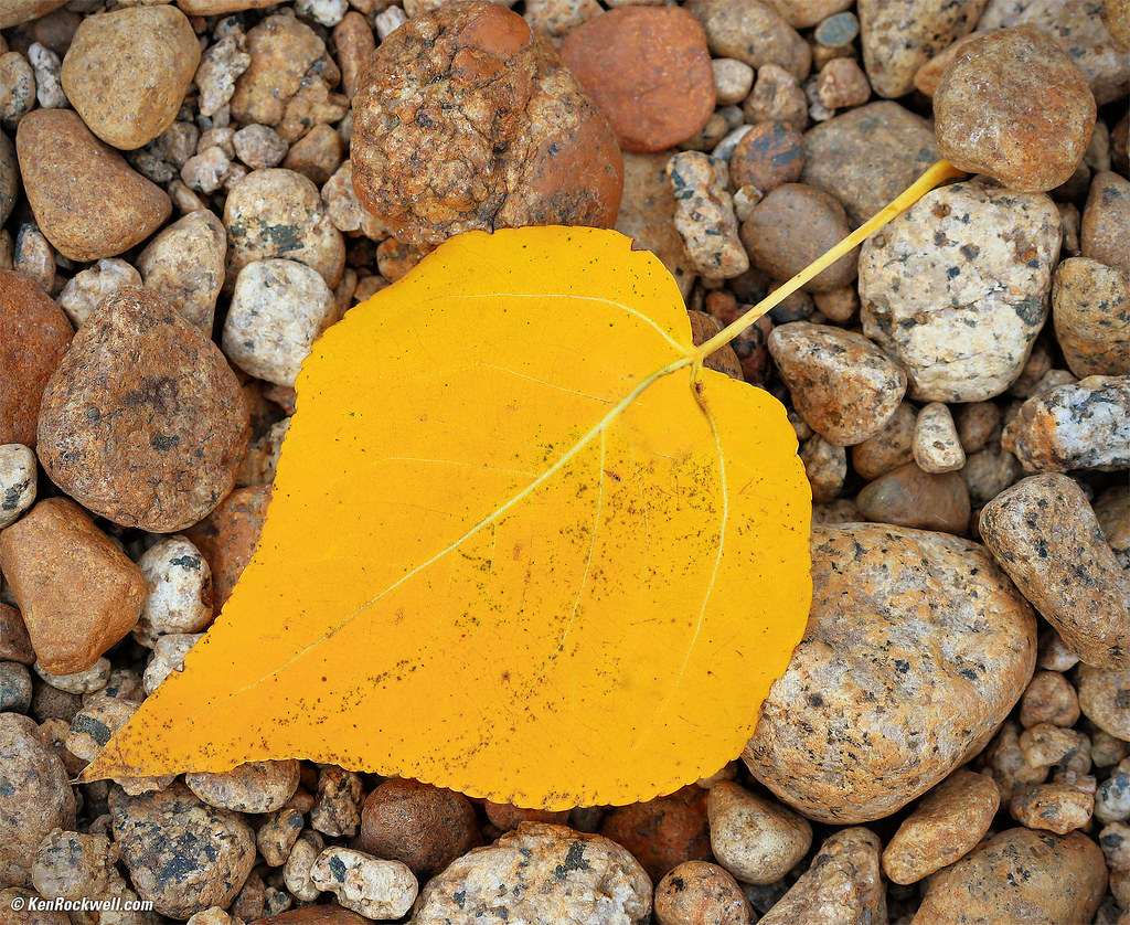 Yellow Aspen Leaf on River Rock, Merced River, Yosemite Va…   Flickr