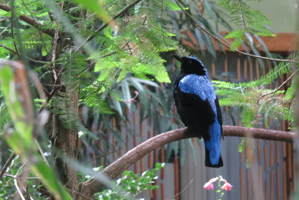 Птичка в китайском павильоне