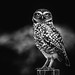 Owl be watching you! BW by Johnny Edward Bankson