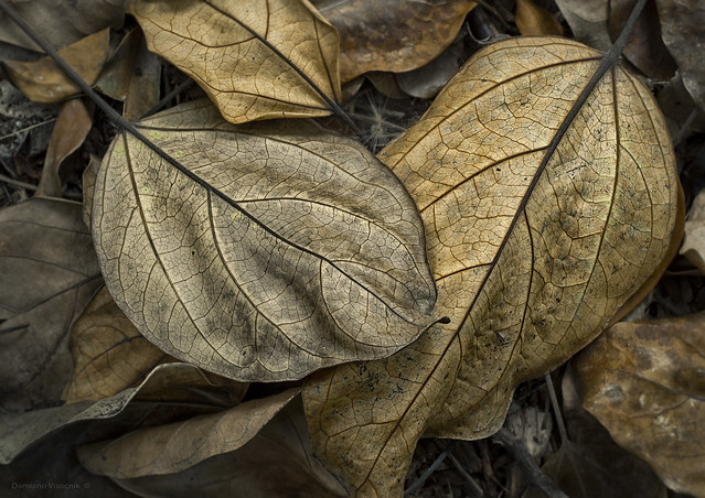 crunchy forest floor