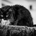 009 - cats cats cats- A9506331