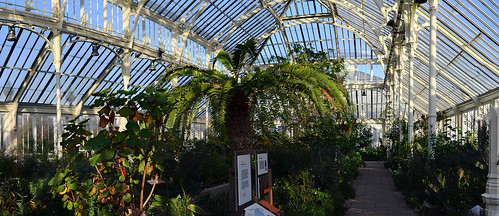 temperate house, kew