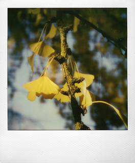 Gingko ... | by @necDOT
