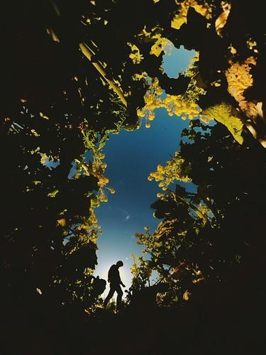 リコー 岡山 笠岡ベイファーム シルエット 菜の花 日本 okayama art japan flower silhouette theta ricoh