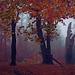As Winter embraces Autumn