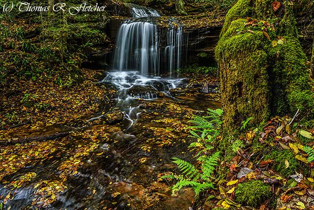 Autumn Wilderness Waterfall