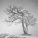 Winter Solitude by Hengki Koentjoro