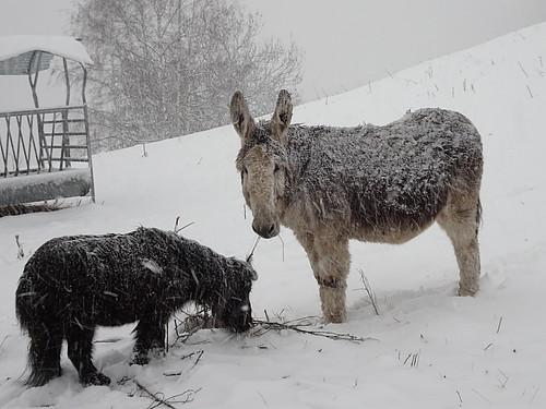 Sous la neige avec mon copain