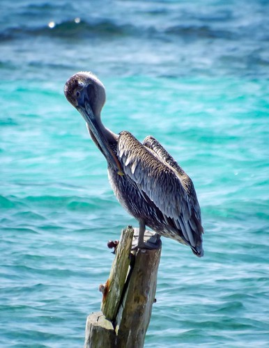 Preening on the dock of the bay.