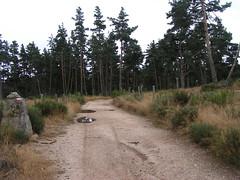 20080906 31519 1007 Jakobus Weg Wald Bäume Felsen Ginster