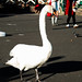 Large Swan - Tall