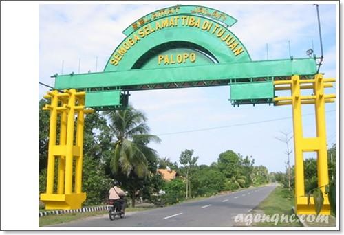 Pusat Penyedia QnC Jelly Gamat Kota Palopo