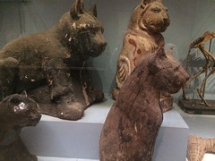 Ancient mummies of animals at the Egyptian museum of Cairo