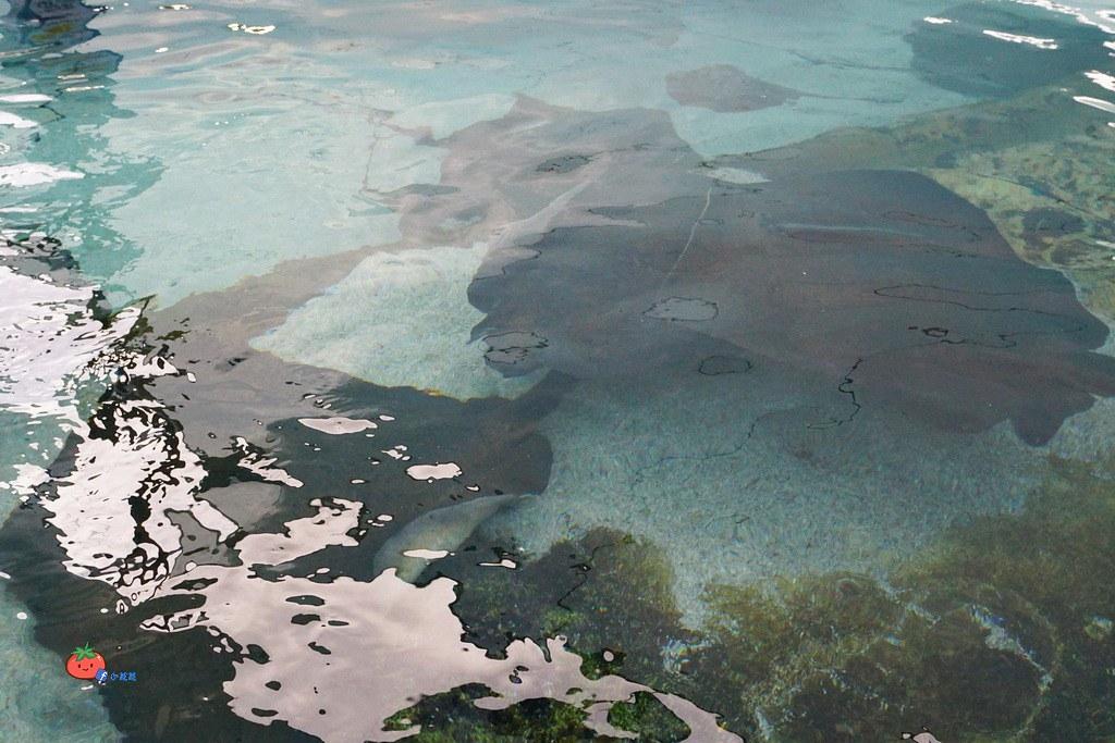 黃金海岸SEA WORLD 海洋世界