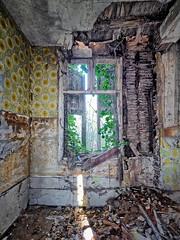 Fenêtre sur jardin oublié
