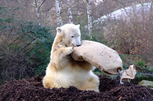Knut 6 December 2007