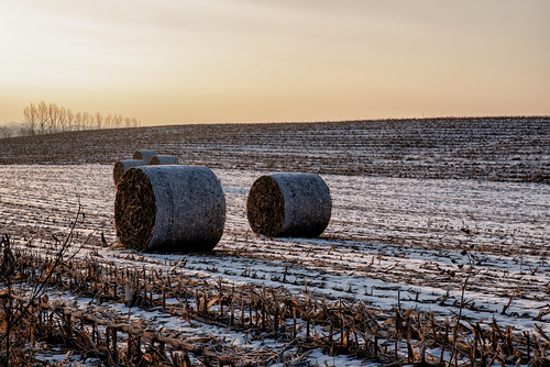 pentax2470f28edsdm cy365 plants nature pentaxlenses cornfield time baretrees equipment weather camera snow pentax day326365 november 365the2018edition scenery 3652018 cornbales morning photography fields 221118 sunrise trees pentaxk1 365challenge field marion iowa unitedstates us