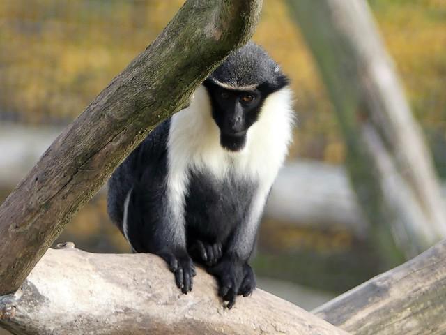 Zoo Osnabrück