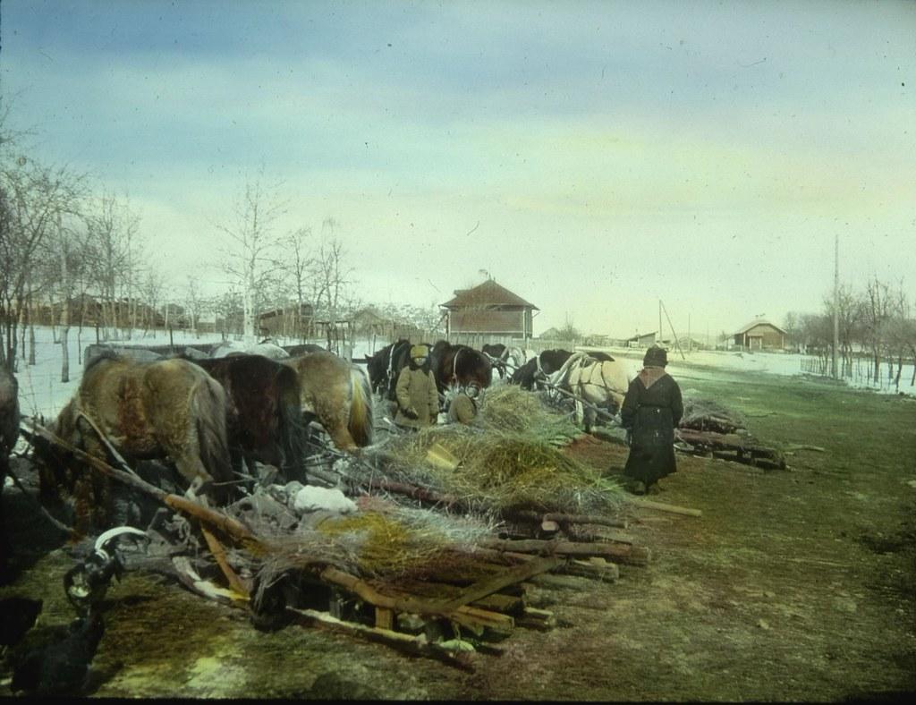 Несколько крестьян сторожат лошадей и повозки с лошадьми после прибытия на рынок