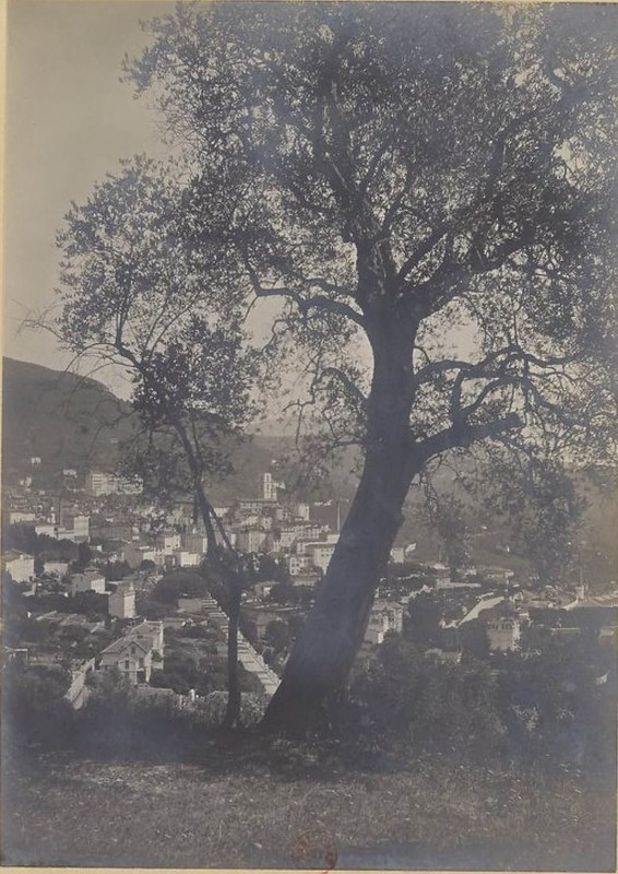 1900. Фабрика парфюмерной компании «Рур Бертран» в Грасе