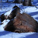 Snow Covered Stump