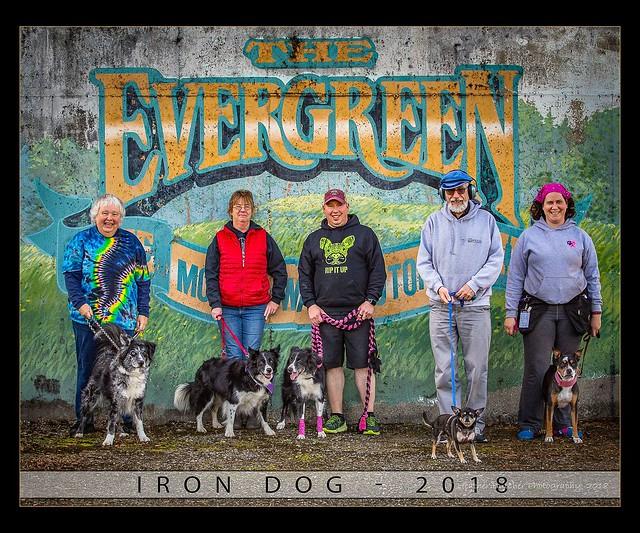 Koira Iron Dog 2018