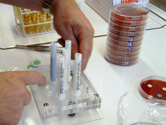 Foto 5 Het maken van een antibiogram Gevoeligheid voor antibiotica zichtbaar maken